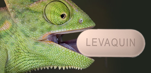 chameleon_levaquin