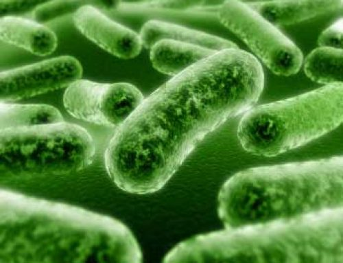 Food for Thought on Probiotics