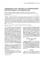 4-Quinolones cause a selective loss of mitochondrial DNA from mouse L1210 leukemia cells.