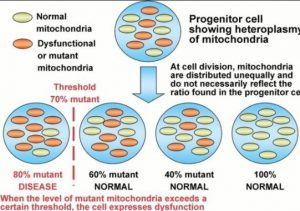 Mito Dysfunction/Disease